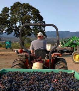 Just another day on the Cadden Family Vineyard farm? The Valley Fire changes an ordinary day into an extraordinary one.